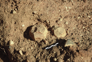A sandstone polyhedron ; one of the oldest implements of Ounjougou. Photo S. Soriano