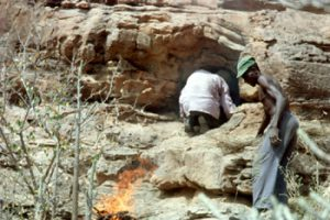 Récolte de miel sauvage dans le Baoulé. Photo E. Huysecom.
